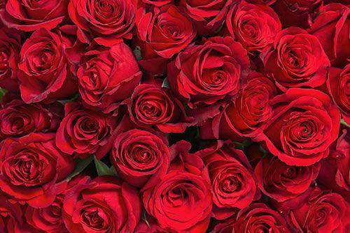 Telenovela Rote Rosen